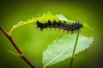 caterpillar-967634_960_720